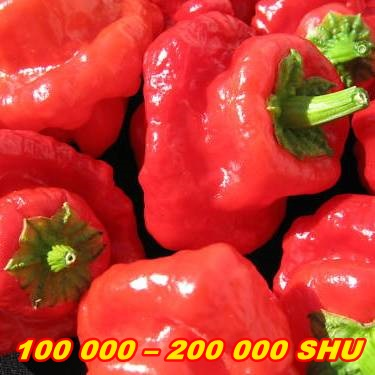 PÁLIVÉ CHILLI PAPRIČKY JAMAICAN HOT RED/10 SEMEN/